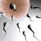 Feiten en fabels over zwanger worden