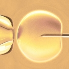 Meer kans op zwangerschap bij ivf door mediterraan dieet